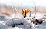 The Tattered Hem of Winter